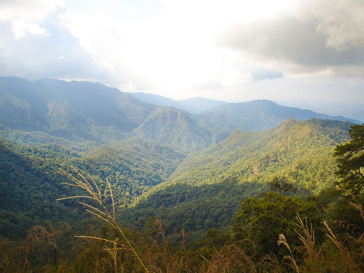 Mae Takhrai National Park. *Photo credit: Department of National Parks, Wildlife and Plant Conservation