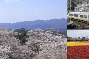 The best way to take in the beauty of Japan's cherry blossom season is at secluded locations easily reachable by rail