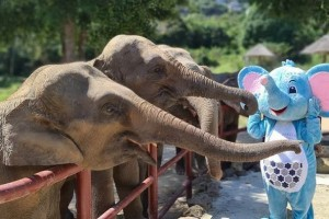 To educate guests about the plight of rescued elephants and encourage them to visit and support Samui Elephant Haven, Meliá Koh Samui has unveiled an elephant mascot Coco to provide information about the Haven and as a host for educational activities about the elephants at the resort's kids club 'Kidsdom'.