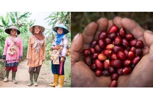 AYANA has collaborated with Java Mountain Coffee to support Indonesia's local community and female coffee farmers.