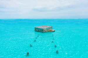 Coralarium - the Maldives' first and only coral regeneration project in the form of an underwater art installation.